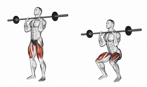 Мышцы, работающие во фронтальных приседаниях