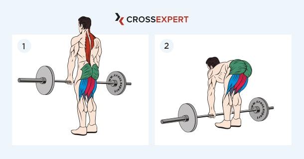 какие мышцы работают при румынской тяге