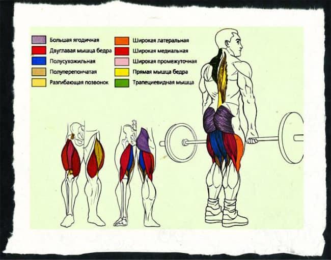 Мышцы во время становой в классическом стиле