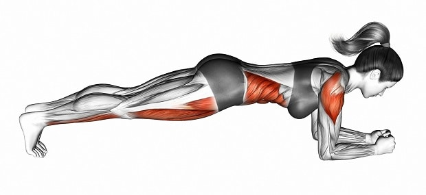 Мышцы, работающие в планке