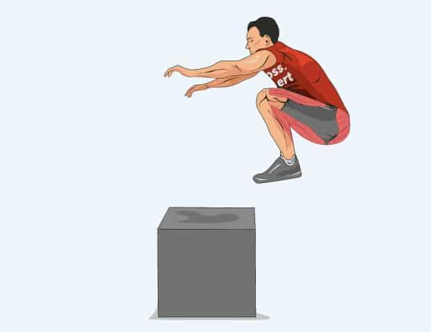 Мышцы, работающие в прыжках на тумбу