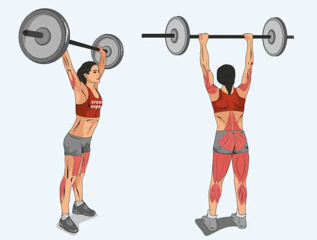 Мышцы, работающие при жимовом швунге штанги
