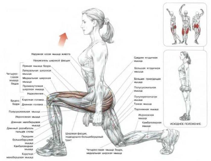 Выпады с гантелями: какие мышцы работают