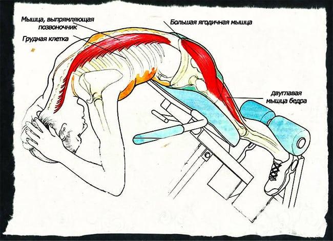Какие мышцы работают при гиперэкстензии