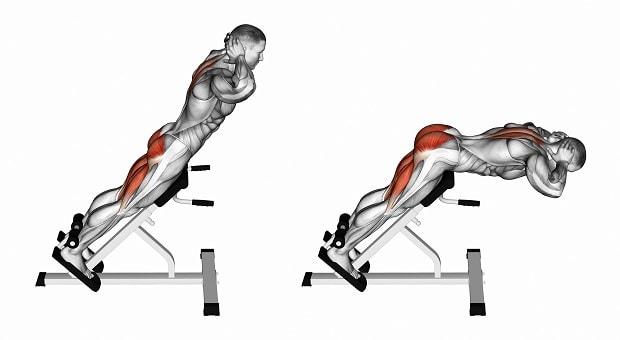Мышцы, работающие при гиперэкстензиях