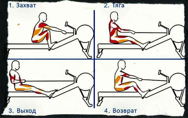 Гребной тренажер - техника выполнения упражнения
