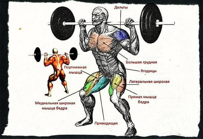 Анатомия приседаний со штангой: мышцы