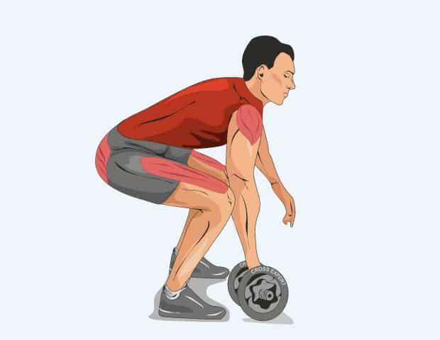 Мышцы, работающие при рывке гантели с пола