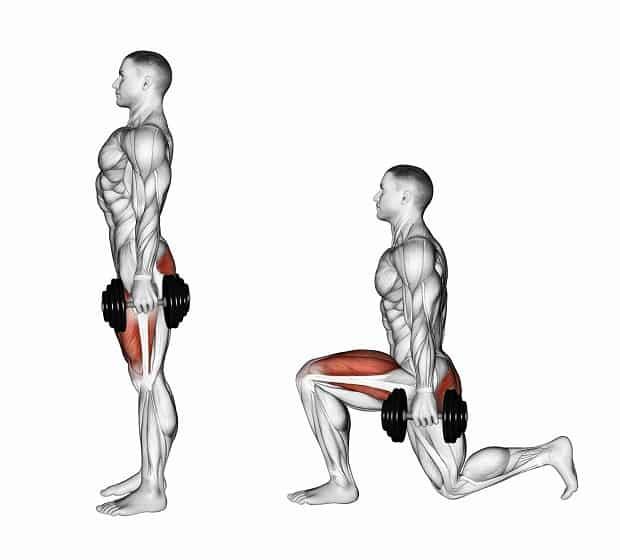 Мышцы, работающие при выпадах с гантелями