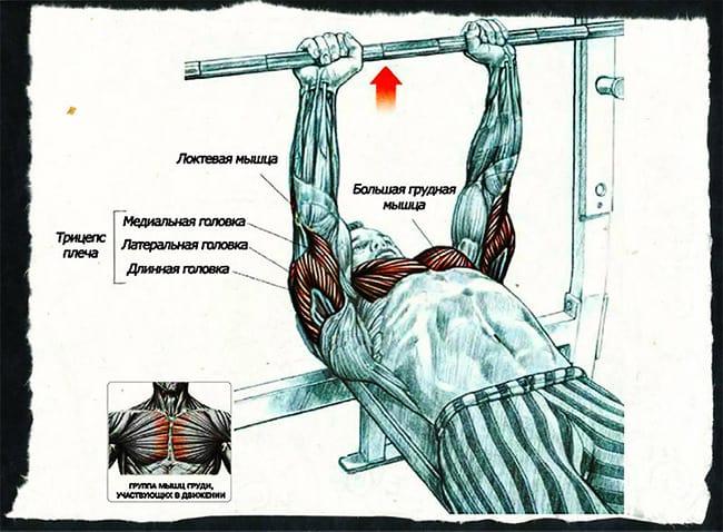 Какие мышцы работают при жиме лежа