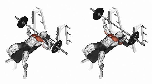 Мышцы, работающие в жиме лежа