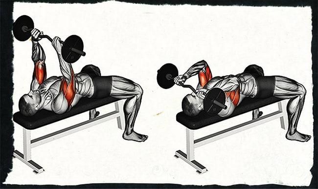 Какие мышцы работают при французском жиме штанги лежа