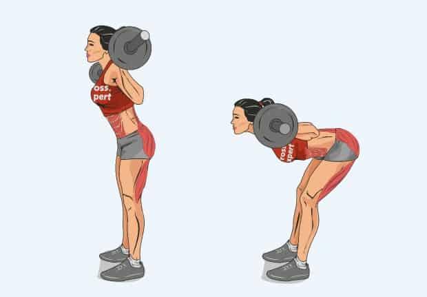 Мышцы, работающие при наклонах со штангой на плечах