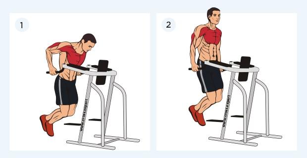 отжимания на брусьях - какие мышцы работают