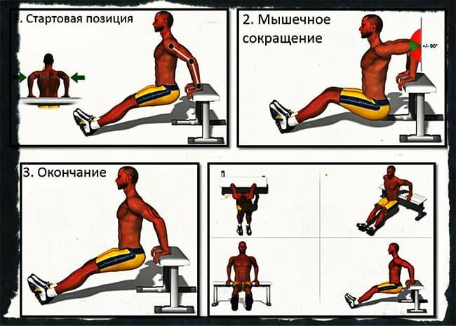 Трицепсовые отжимания от скамьи упражнение
