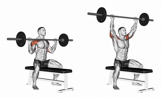 Мышцы, работающие при жиме штанги вверх