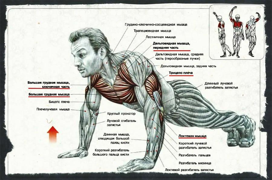 Как правильно качать грудные мышцы в домашнем условии