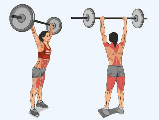 Мышцы, работающие в кластерах со штангой