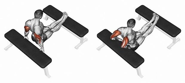 Мышцы, работаюшие при отжиманиях от скамьи