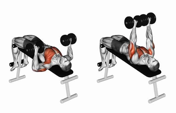 Мышцы, работающие при жиме гантелей лежа