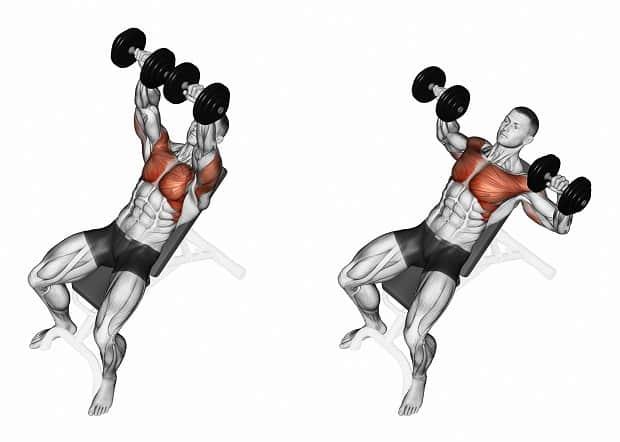 Мышцы, работающие в жиме гантелей на наклонной скамье