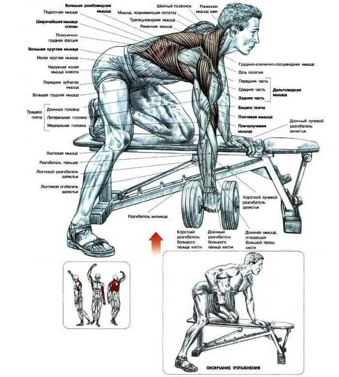 Какие мышцы работают при тяге гантели одной рукой