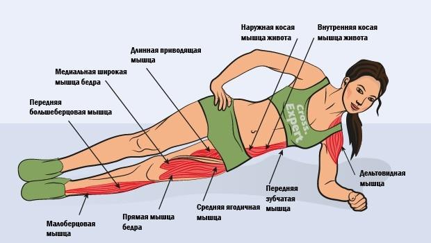 Какие мышцы работают при боковой планке