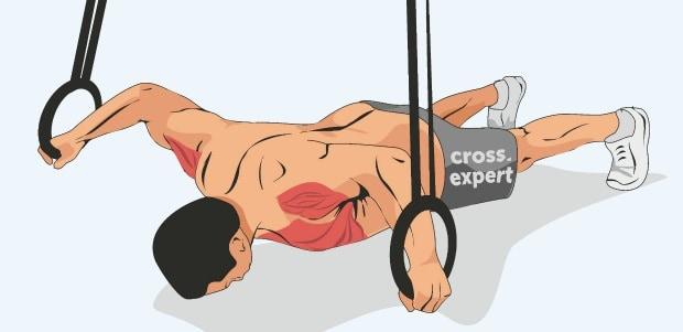 Мышцы, работающие при глубоких отжиманиях на кольцах