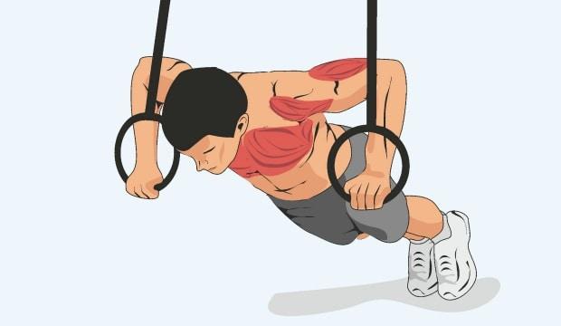 Мышцы, работающие при горизонтальных отжиманиях на кольцах