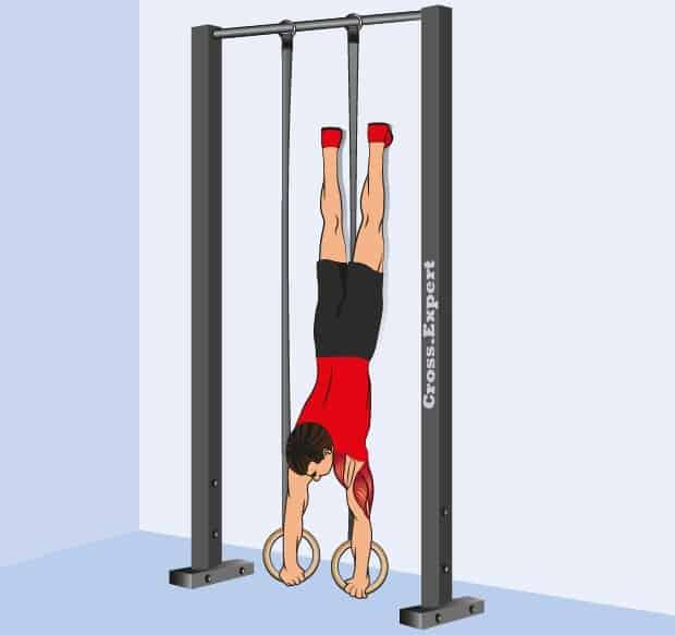 Мышцы, работающие при отжиманиях на кольцах вниз головой