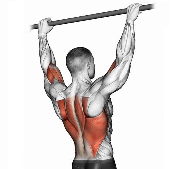 Мышцы, работающие при подтягиваниях к груди