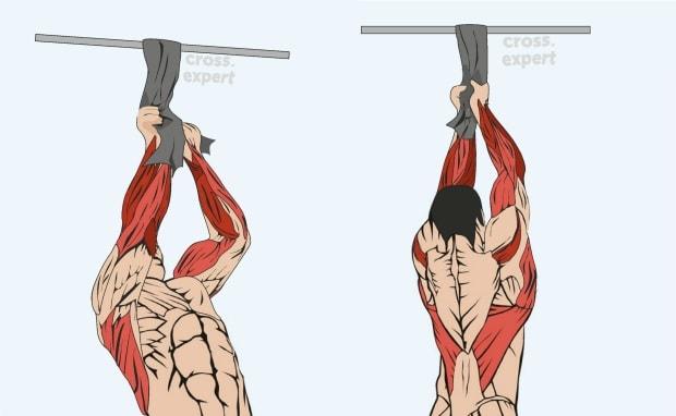 Мышцы, работающие в подтягиваниях на полотенце