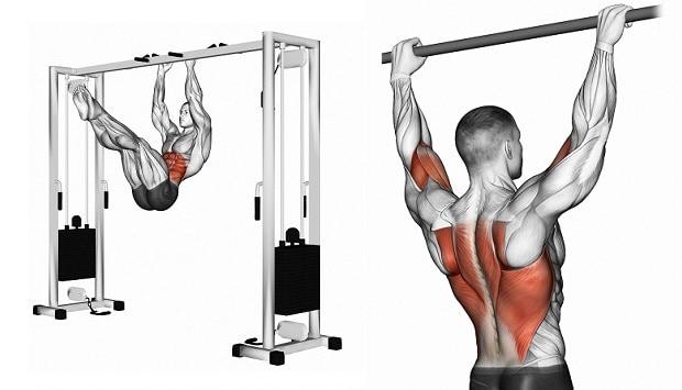 Мышцы, работающие при подтягиваниях уголком