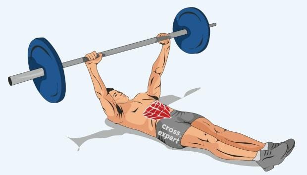 Мышцы, работающие в упражнении полотеры