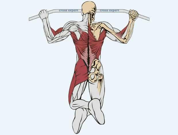 Мышцы, работающие при прыгающих подтягиваниях