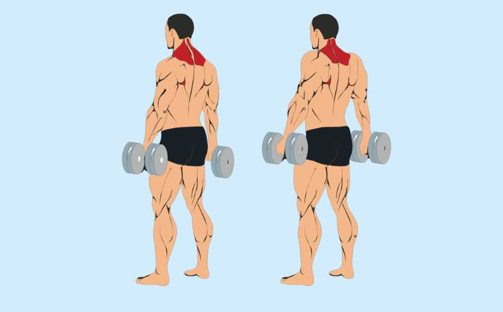 шраги с гантелями какие мышцы работают
