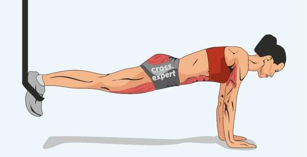 Мышцы, работающие в скручивании планки на кольцах