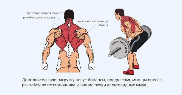 тяга штанги - какие мышцы работают