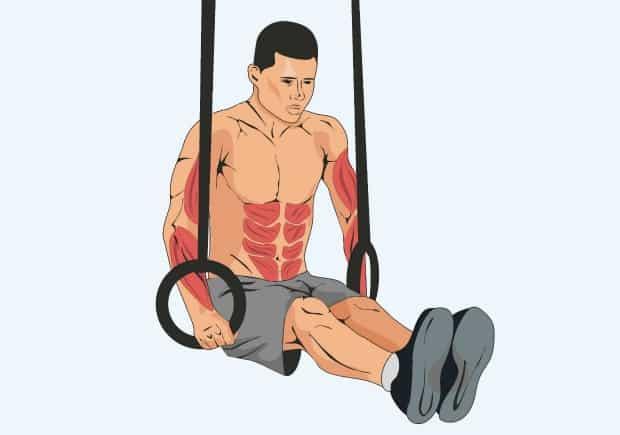 Мышцы, работающие при удержании уголка на кольцах