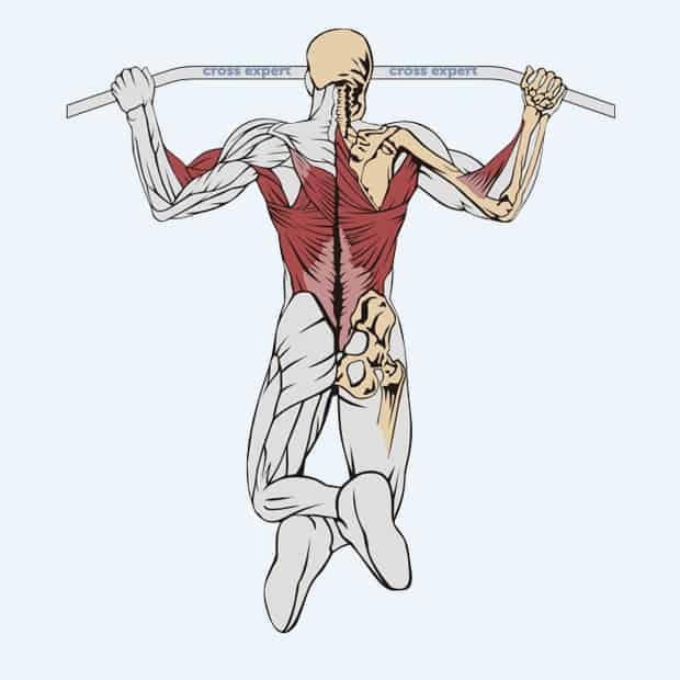 Подтягивания широким хватом - какие мышцы работают