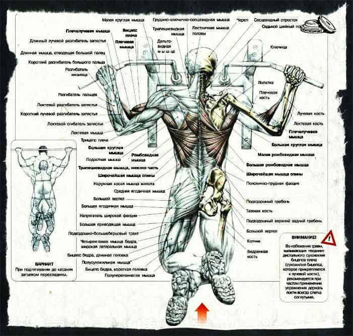 При отжиманиях широким хватом какие мышцы работают