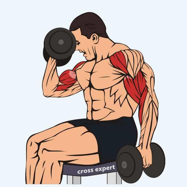 Сгибание рук с гантелями - какие мышцы работают