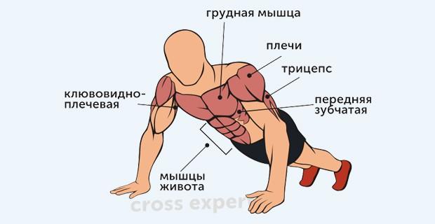 виды, техника выполнения упражнения и ...