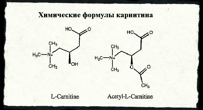 Химические формулы карнитина