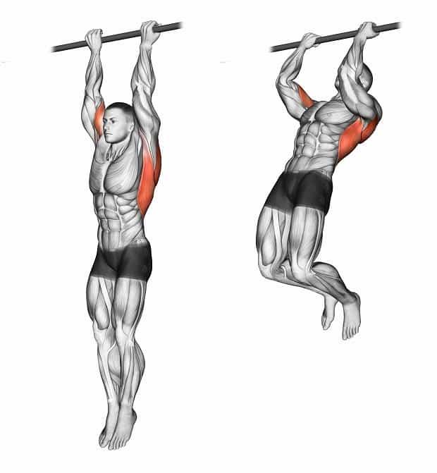 Мышцы, работающие при подтягиваниях обратным хватом