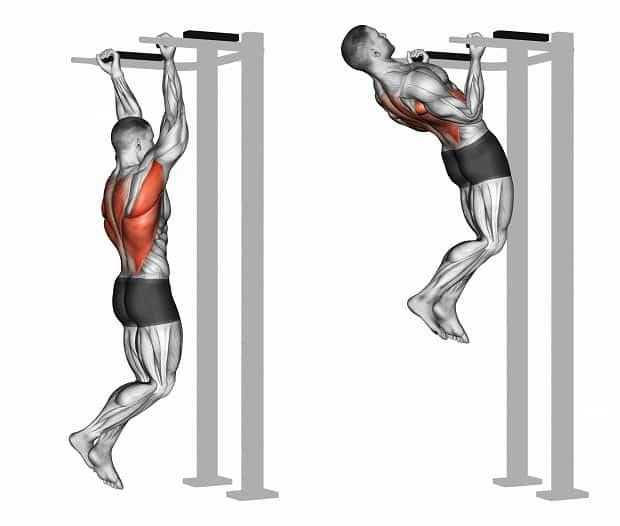 Мышцы, работающие при подтягиваниях параллельным хватом