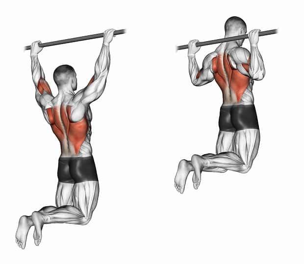 Мышцы, работающие при подтягиваниях за голову