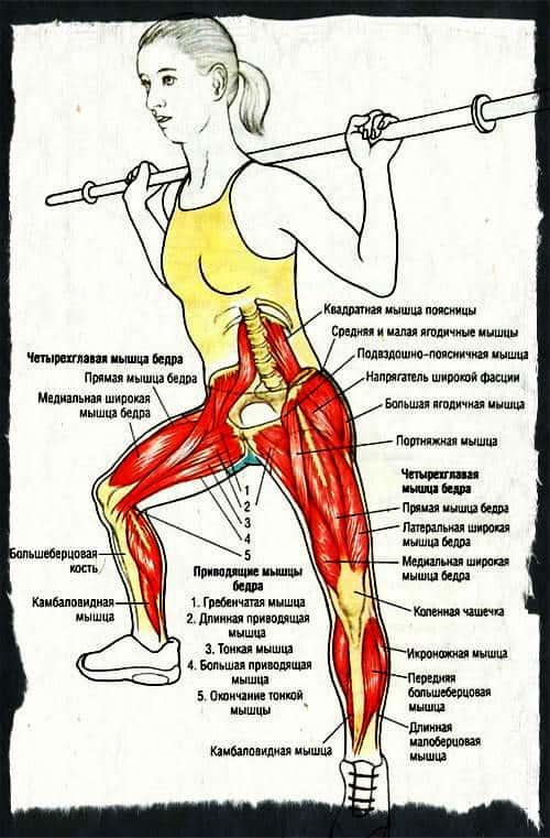 Какие мышцы работают при боковых выпадах со штангой