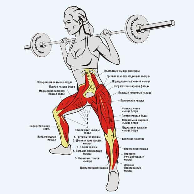 Выпады со штангой в стороны - мышцы