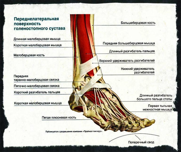 боли в голеностопных суставах при ходьбе
